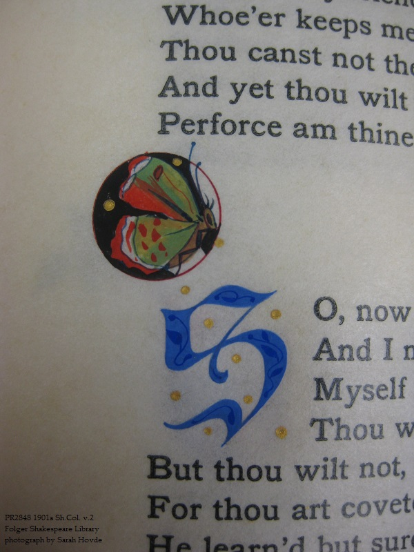 a close-up of another butterfly, accompanying Sonnet 134