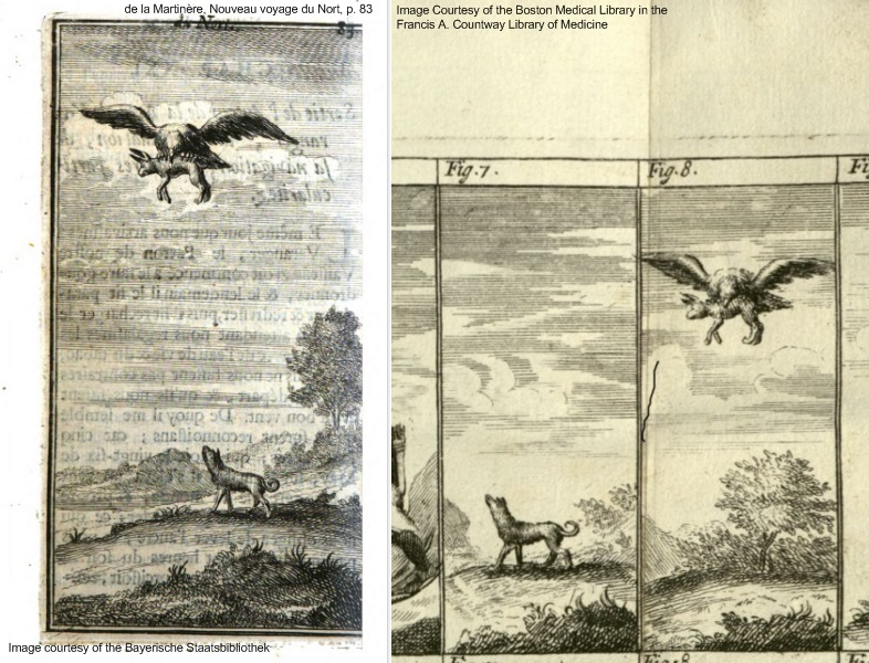 right: image of eagle carrying away a wolf while a second wolf looks on; left: two separate images, one of a single wolf, the second of an eagle carrying off a wolf