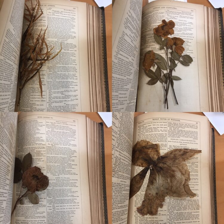 A selection of flowers from Folger 265225